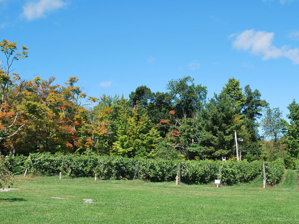 Explore the orchard at Nashoba Valley Winery
