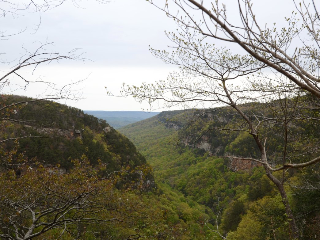 Cloudland Canyon as seen from the top of the gorge.
