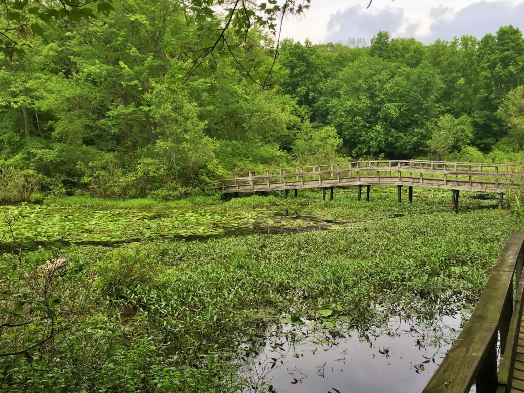 One of the Teatown Lake Reservation's many bridges.