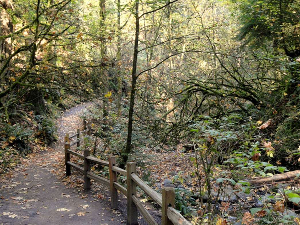 Kuehner and other trail runners love the array of Seattle-area trails, like those in Forest Park.
