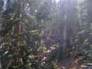 Humphreys Trail