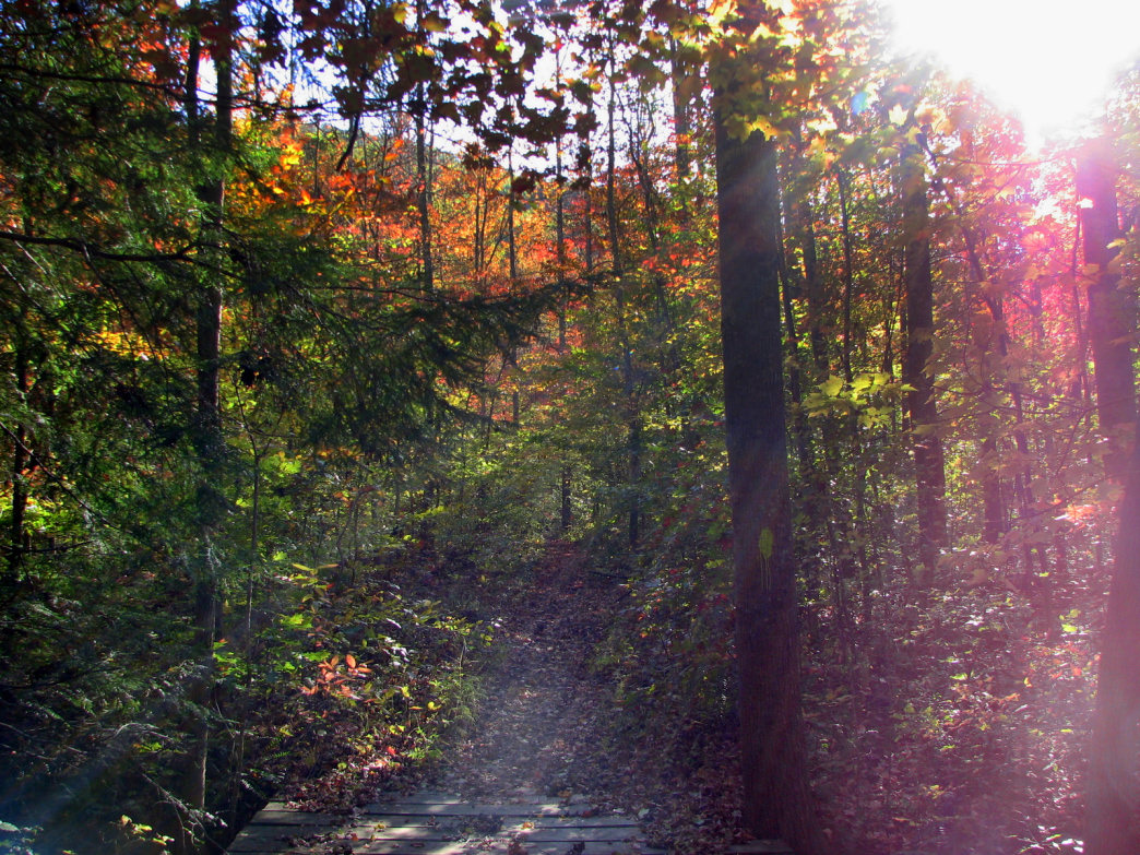 Frozen Head State Park is a favorite hiking and camping destination for many locals.