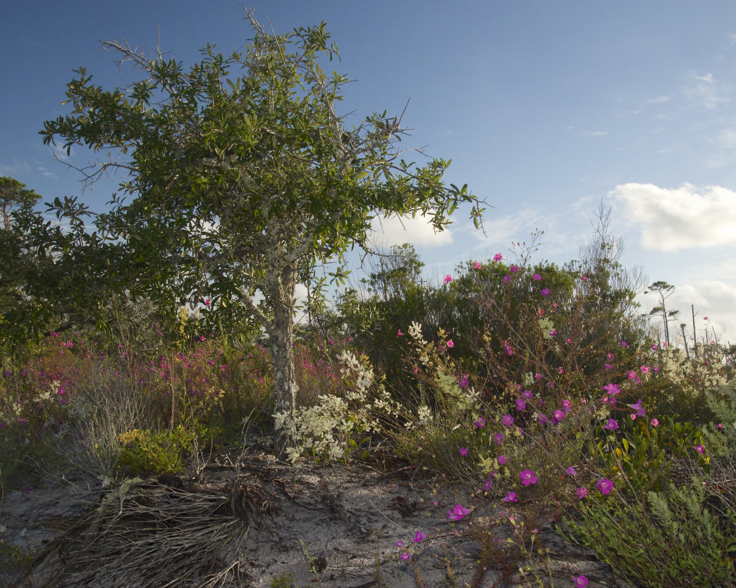 The four-mile Pine Beach Trail winds through several different ecosystems before arriving on the beach.