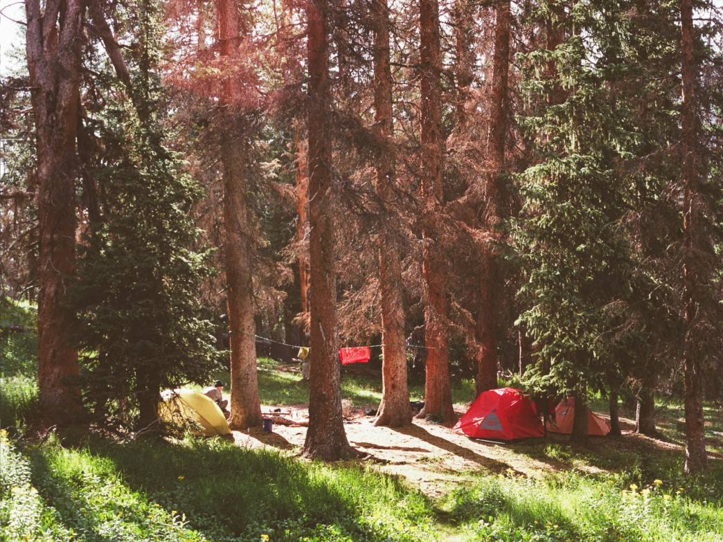 Camping among the evergreen forests.