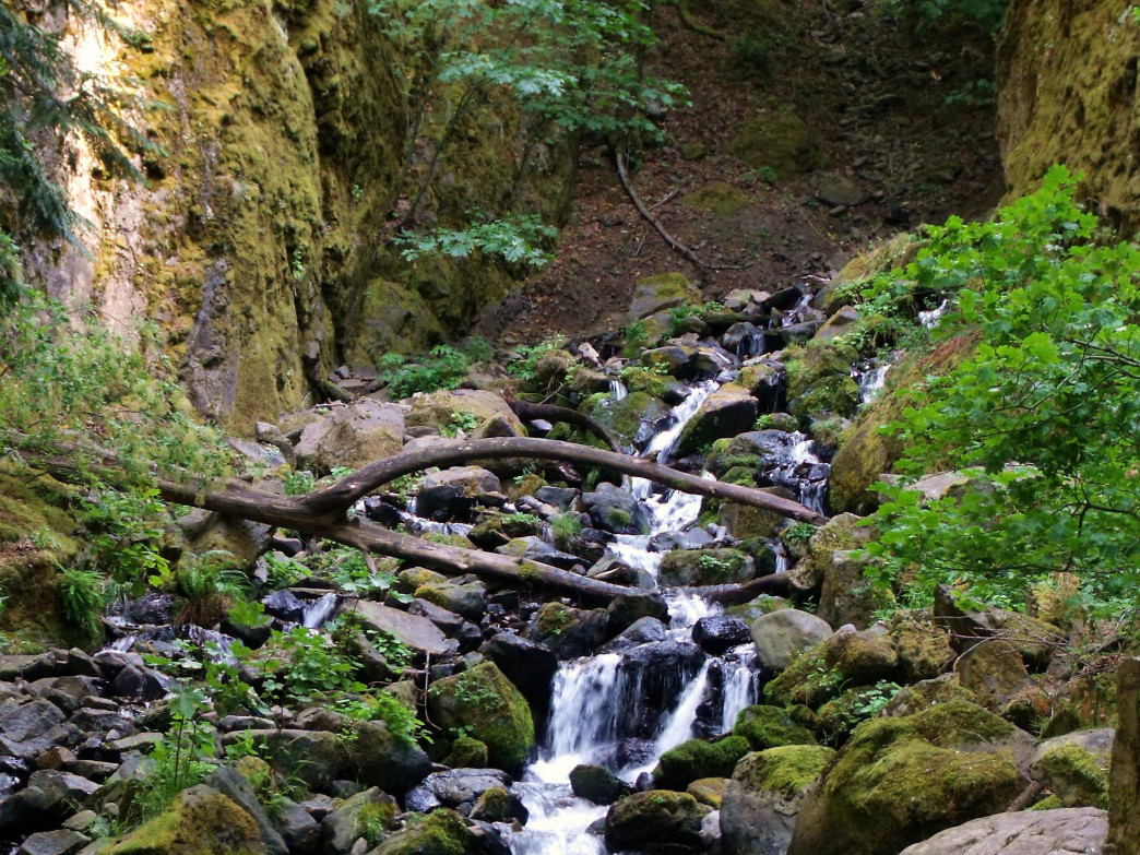 The Columbia River Gorge is well known for waterfalls, including this one, Starvation Creek Falls.