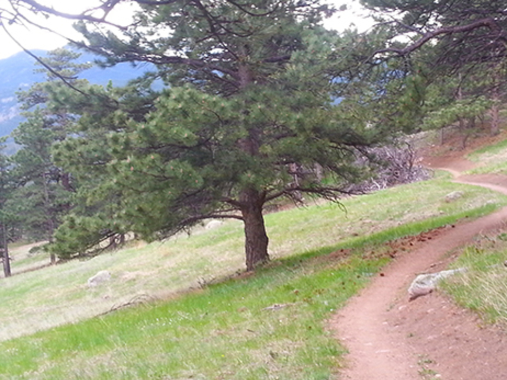 Trail runners rejoice, your knees will love you for descending this trail!