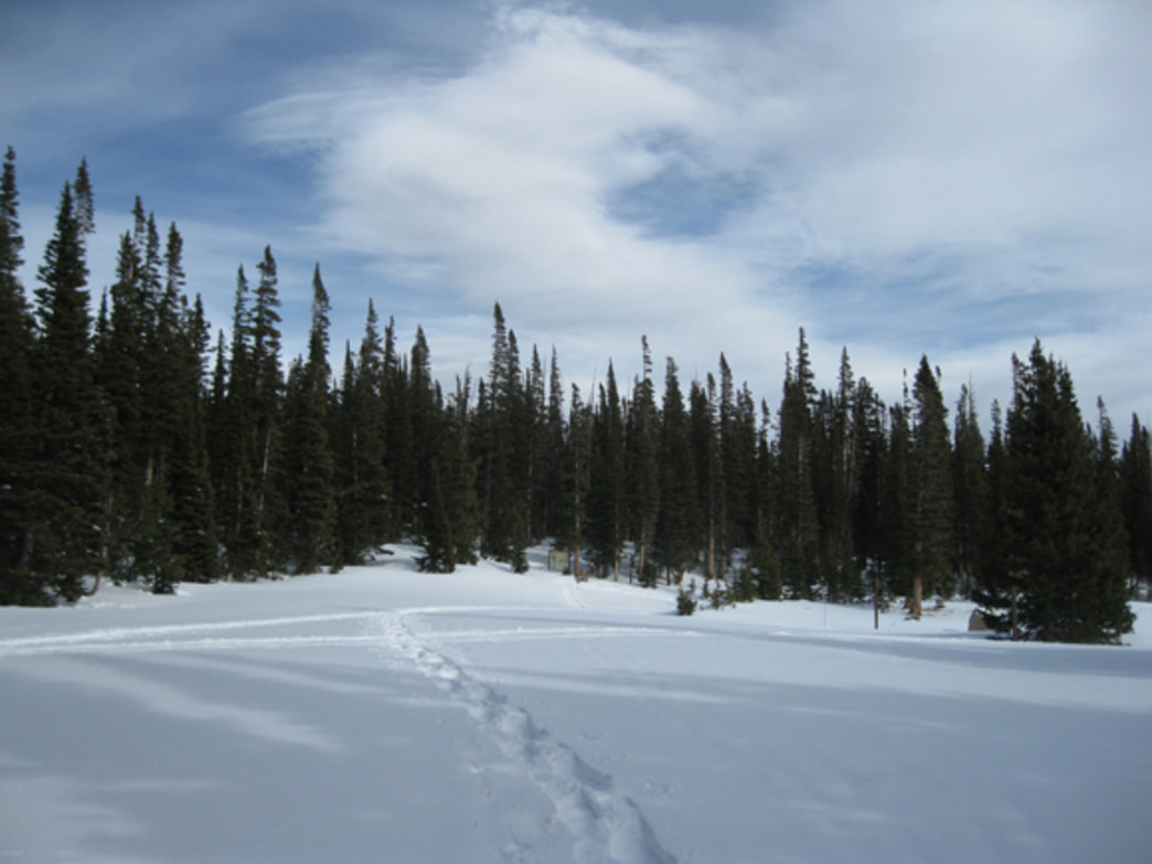 Snowshoe tracks at Brainard Lake