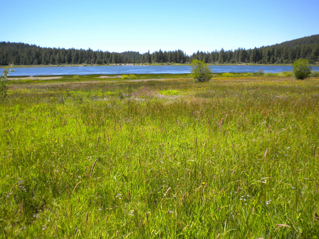 Lush meadows surround Spooner Lake