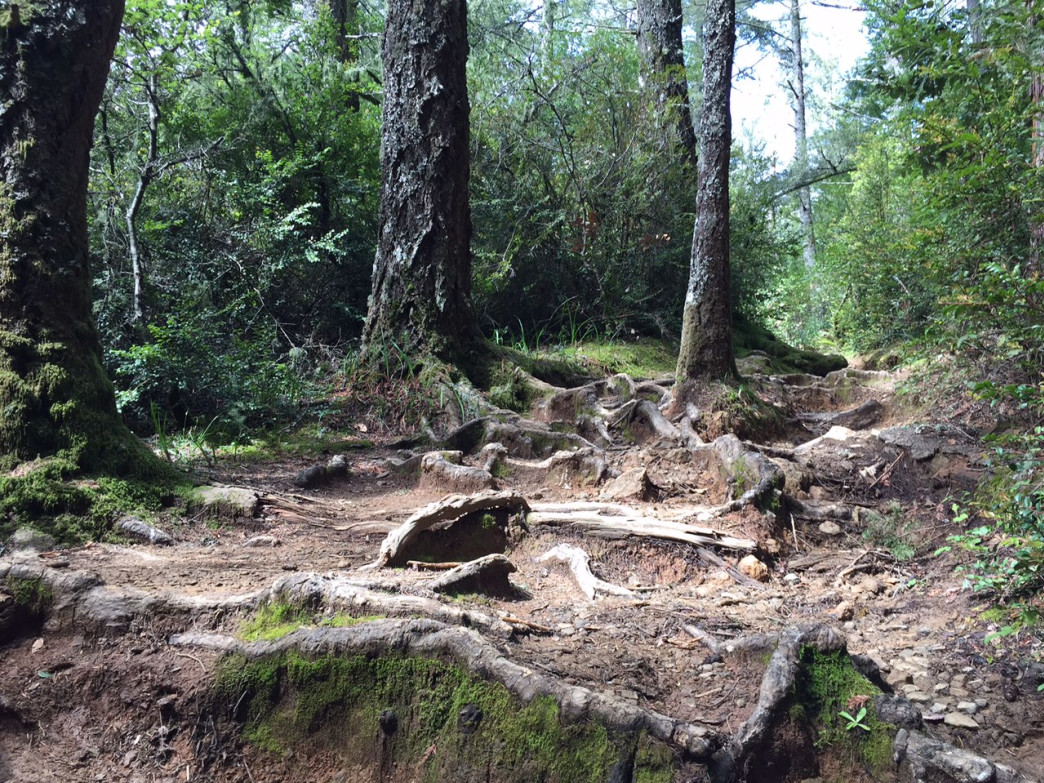 Roots, ruts, and hundreds of steps make for a highly technical trail.