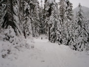Image for White Pass Skiing
