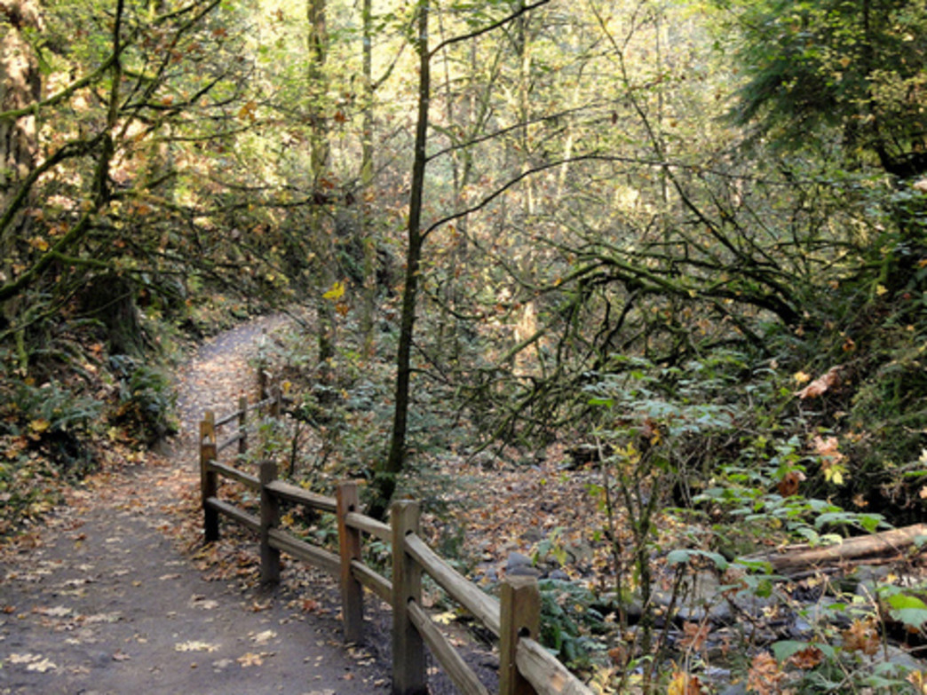 Reuland and other trail runners love the array of Seattle-area trails, like those in Forest Park.