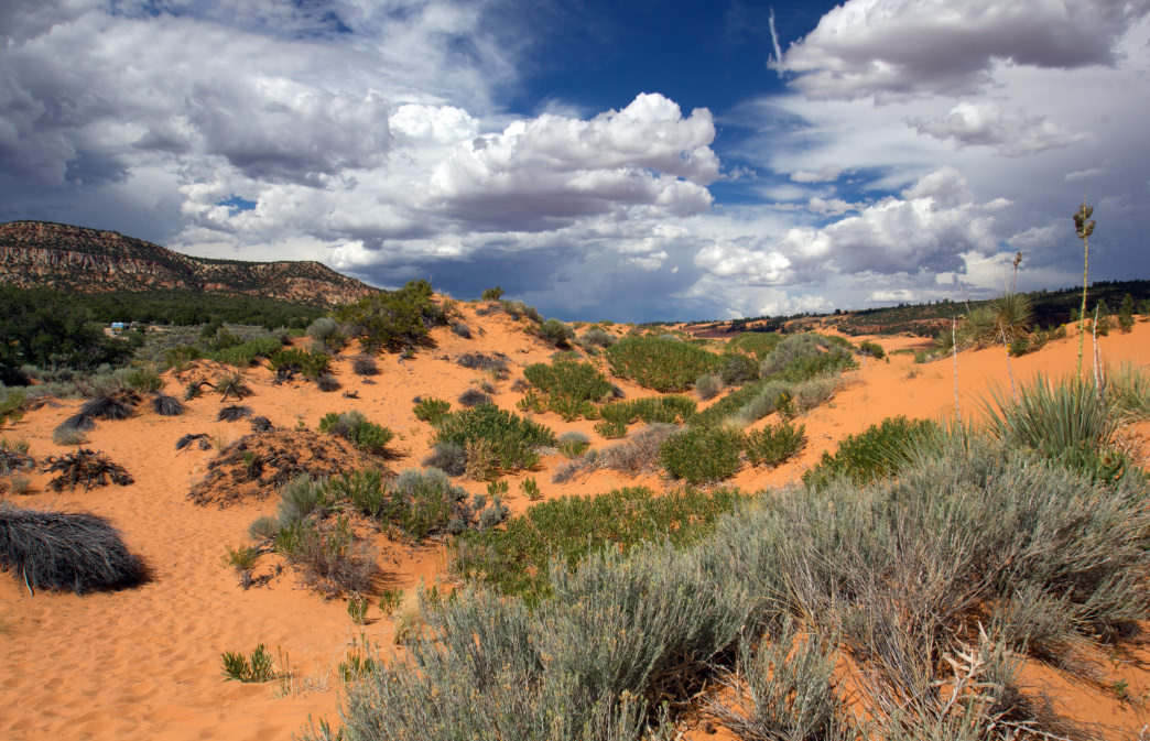 The Coral Pink Sand Dunes roll across the landscape.