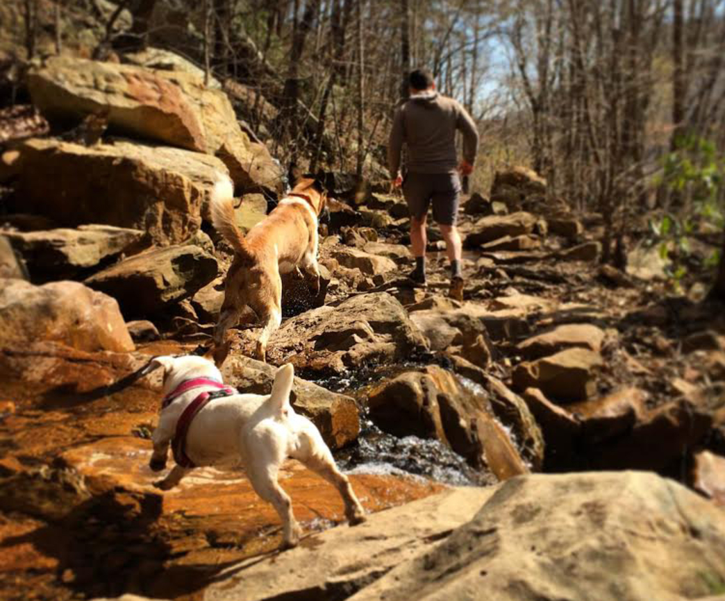 The Best Dog-Friendly Trails in Chattanooga