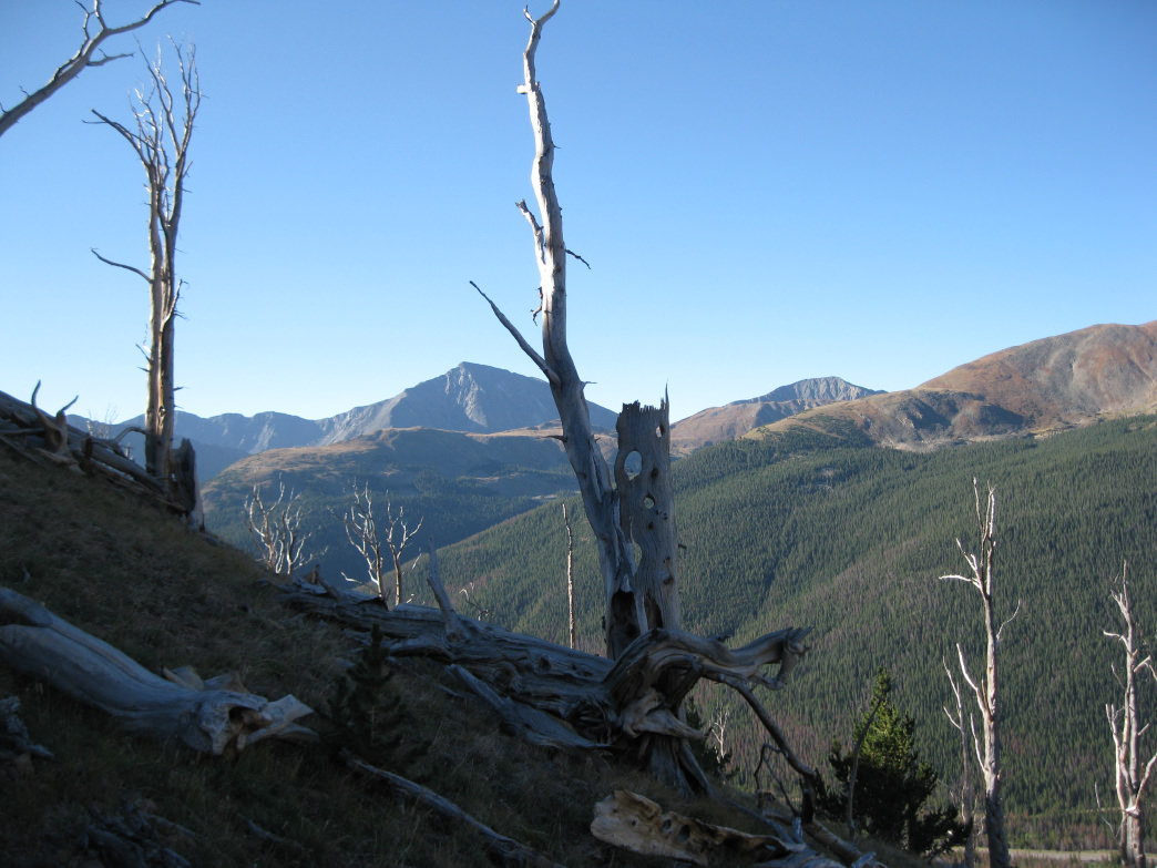 Hiking through the ghost forest on Mount Parnassus.      James Dziezynski