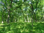 Image for Greene Valley Forest - Running