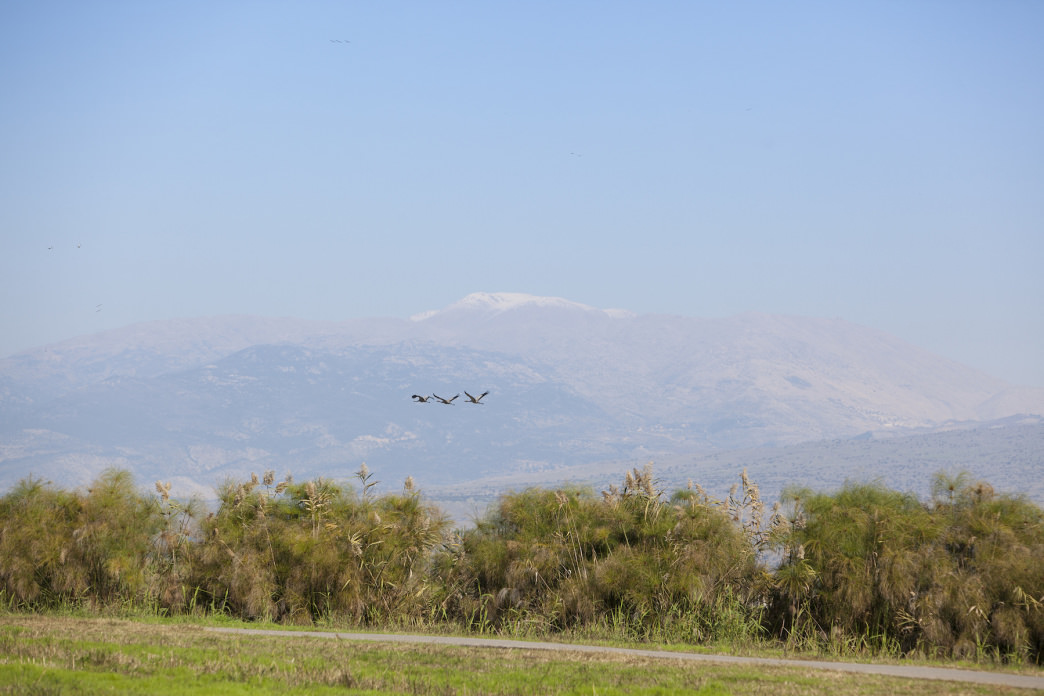 Each year 1 billion birds migrate through Israel.