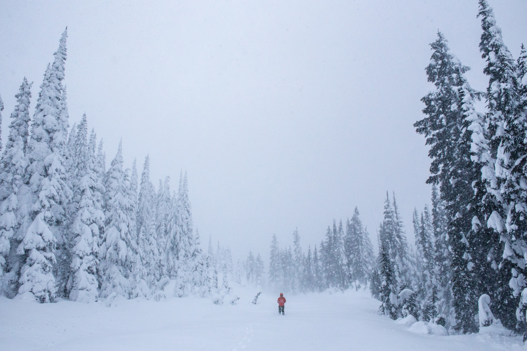 A splotch of red in the midst of a Mount Rainier National Park whiteout.