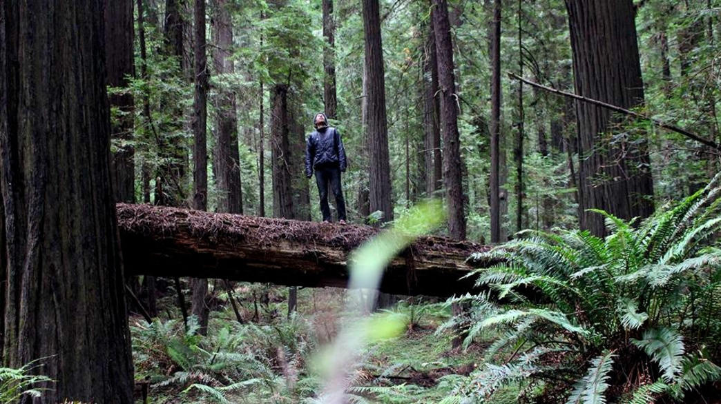 Humbled by the tallest trees on earth