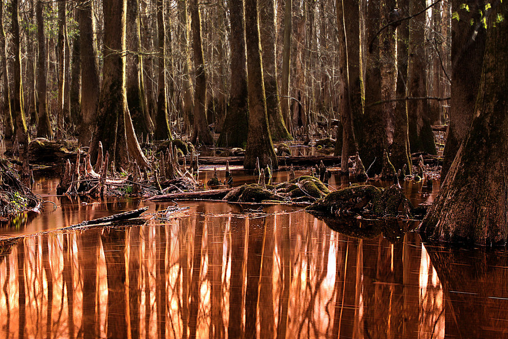 The trees of Congaree National Park commune with paddlers of the Cedar Creek Canoe Trail in south Carolina.