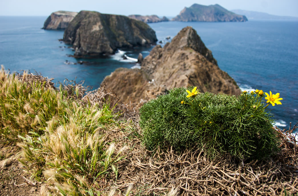 The view from Anacapa Island.