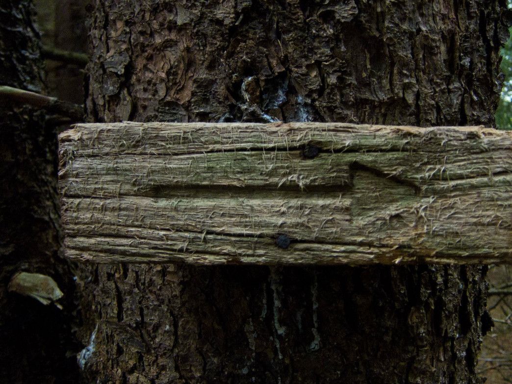 An old, gnarled wooden arrow along one of the many trails in Dolly Sods Wilderness.