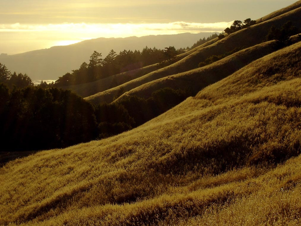 The Matt Davis Trail—arguably the best trail running destination in San Francisco