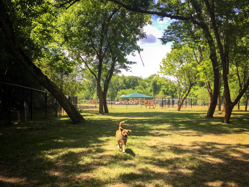 Plenty of room to stretch those puppy legs at Goat Island Dog Park.