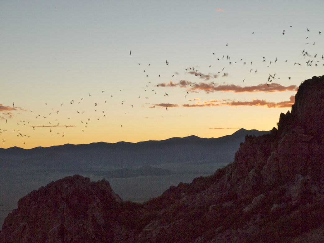 Head to the now-defunct Orient Mine at dusk to check out the area's history—and the cave's resident bats.