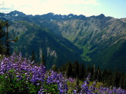 Image for Marmot Pass