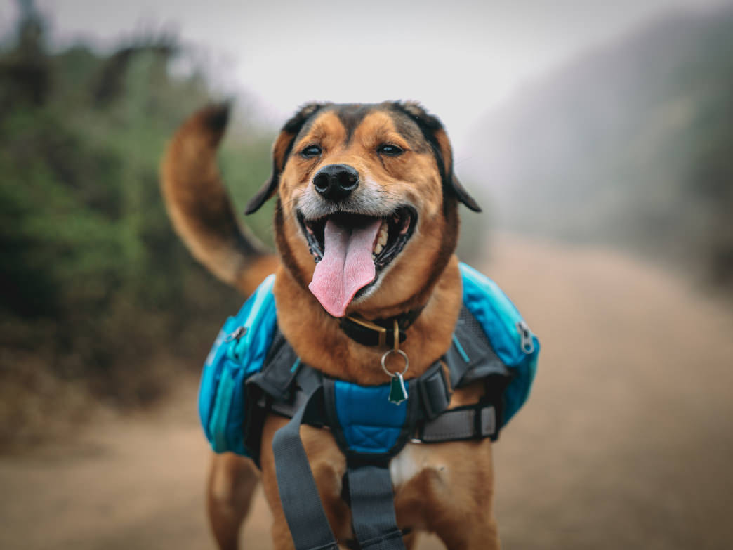 Hiking provides dogs great exercise and stimulates their senses.