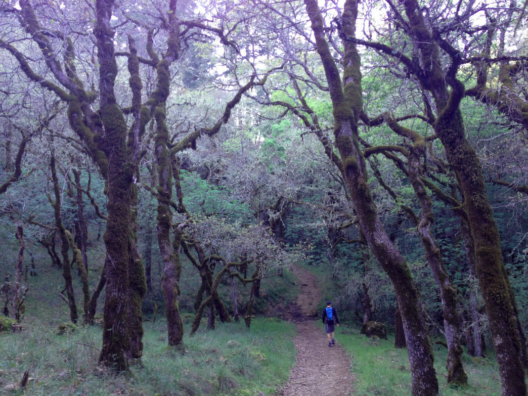 Trails in Bothe-Napa State Park have a magical quality.