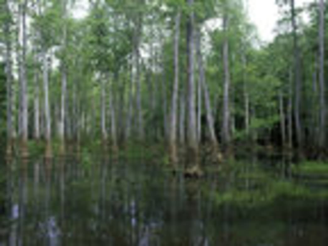 Bond Swamp on the Ocmulgee River