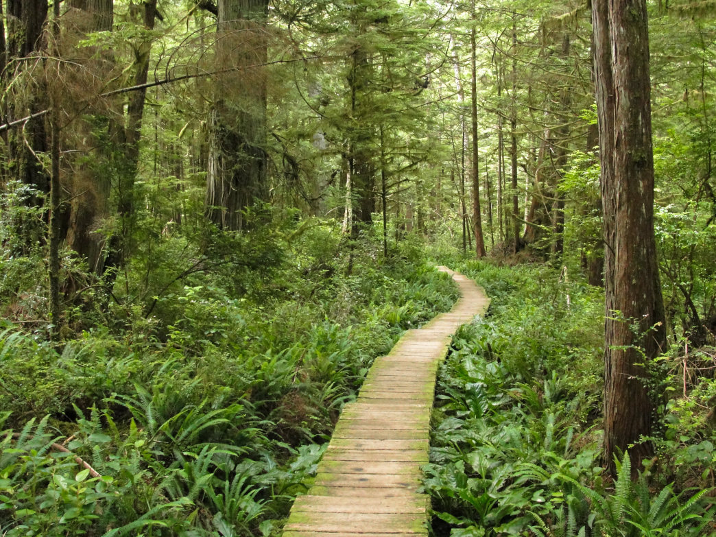 The Olympic National Forest in all its lush glory.