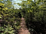 20170710_Short Springs State Natural Area_Hiking5