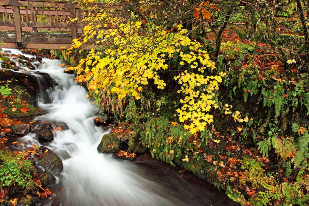 Wahkeena Creek, Columbia River Gorge, Oregon.