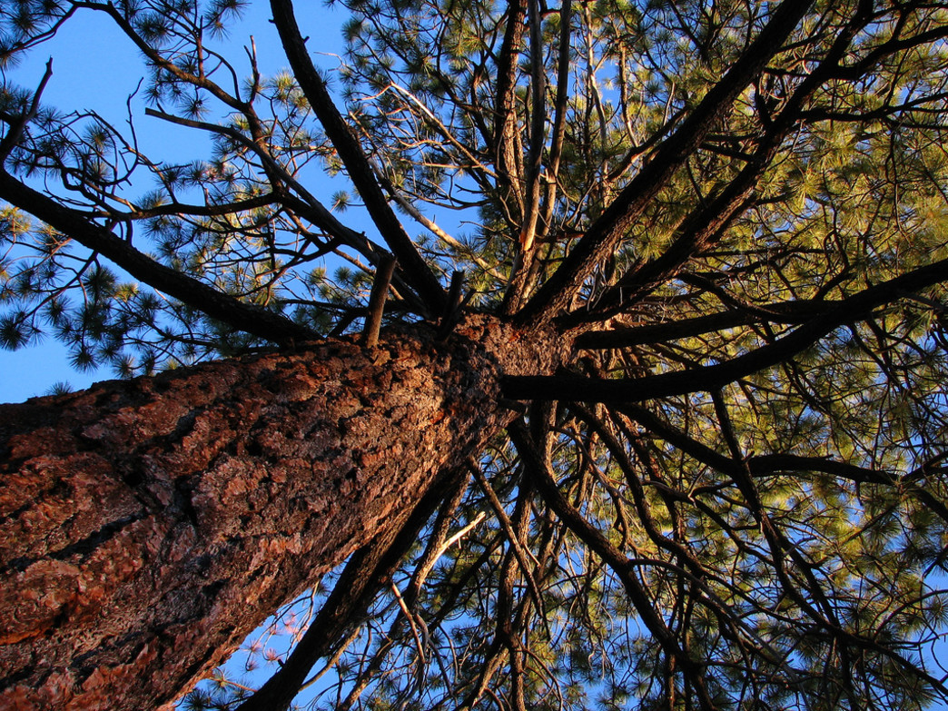Look up to see if there are any dead or dying branches above your campsite.
