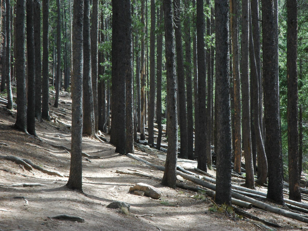 A short drive from Denver, the town of Evergreen has plenty of trails to choose from.