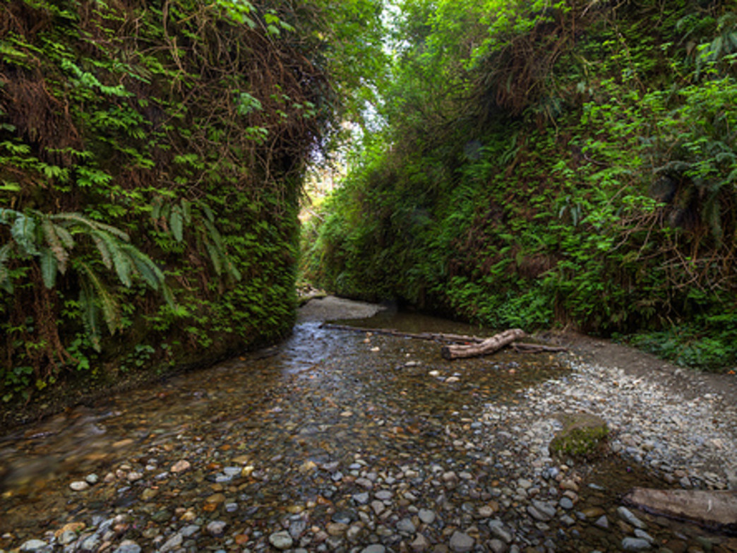 Fern Canyon Trail
