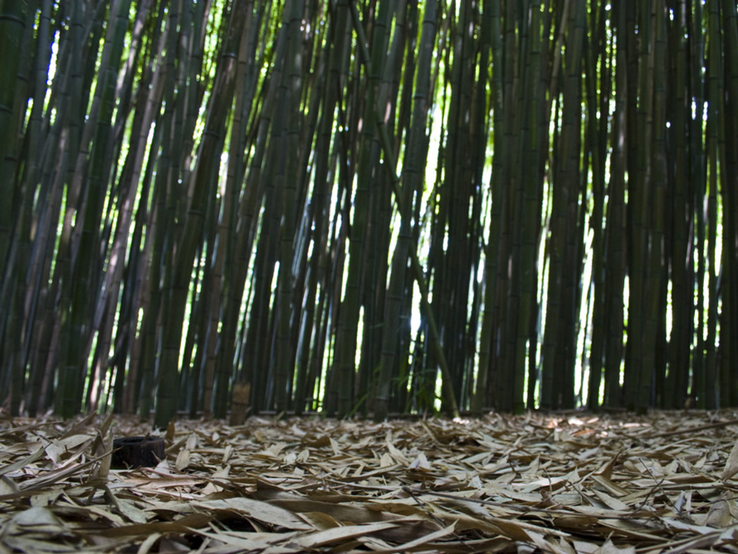 The bamboo forests at Reflection Riding