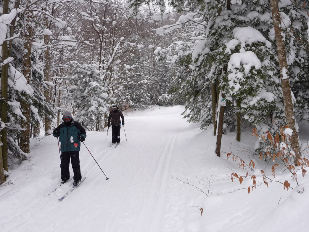 Cross country skiers traversing the trails at White Grass.