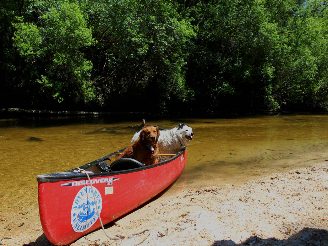 The Black Water River offers shade, sandy shores, and plenty of wildlife to see along the way—plus it's pet-friendly.