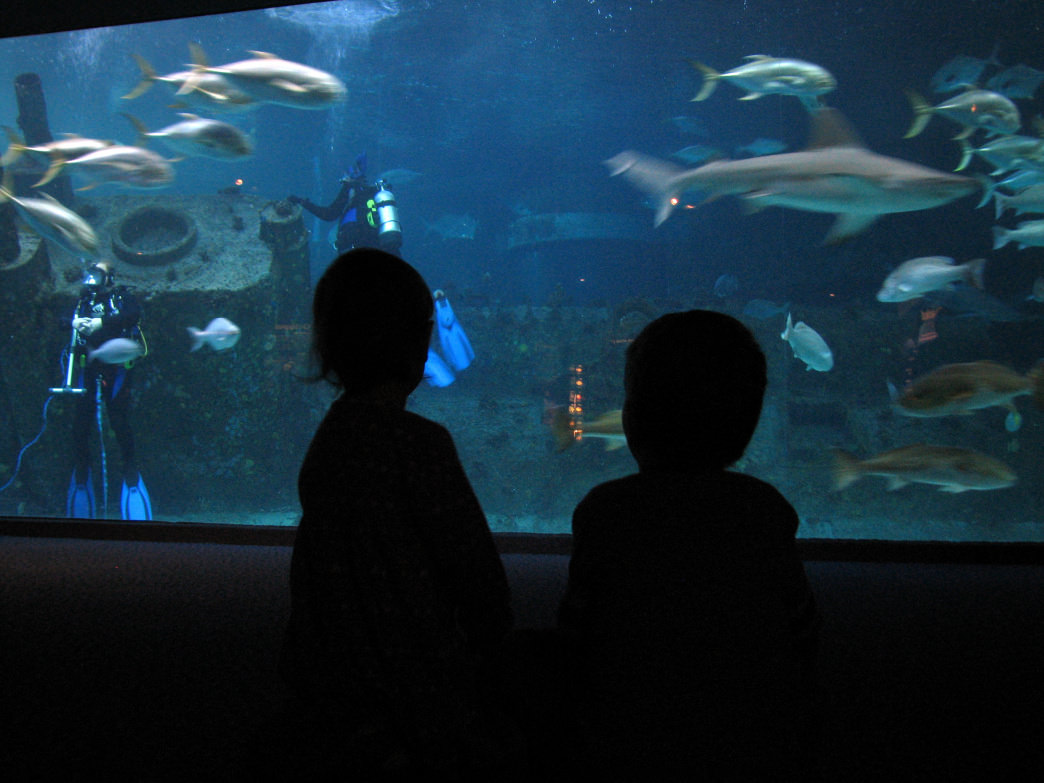Enjoying the sea life at the North Carolina Aquarium at Pine Knoll Shores.