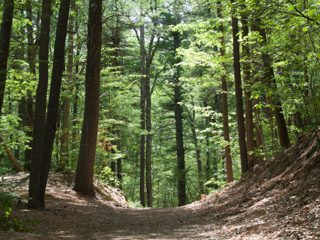 A view of the wooded trails that lead to Noanet Peak