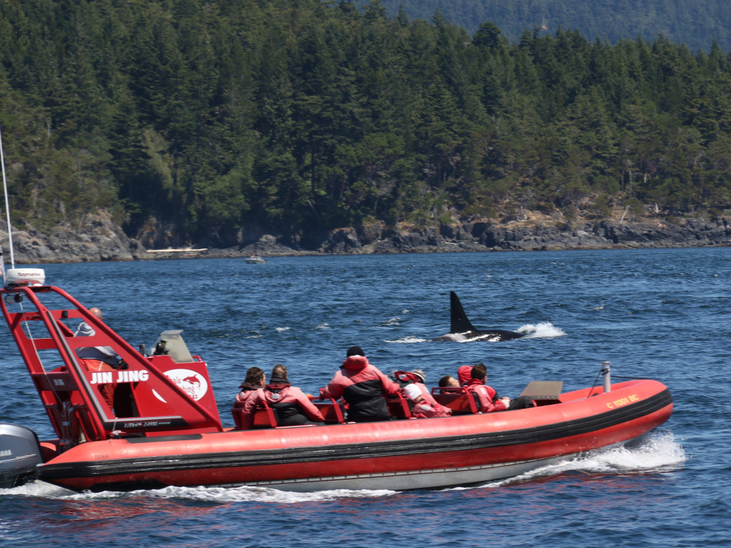Some of the best whale-watching in the world can be found just off the coast of Port Angeles