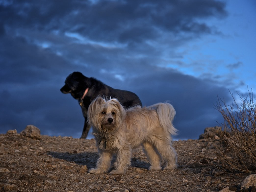 Dogs are eager explorers and great camping companions.