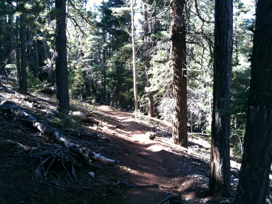 Winsor Trail, New Mexico.
