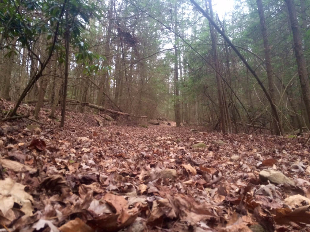 The Nature Ridge trail begins with a steep ascent atop a ridge.
