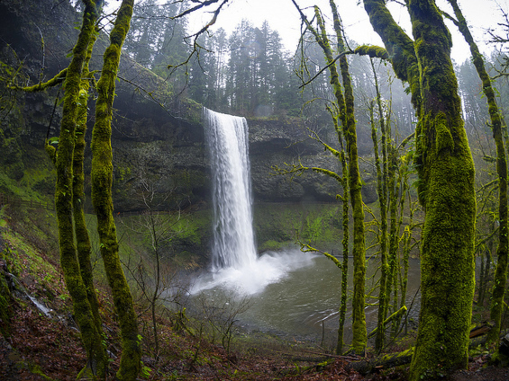 Silver Falls State Park, home to the Trail of Ten Falls, is the most popular state park in Oregon.