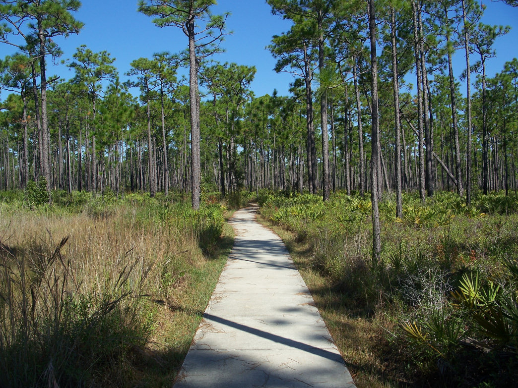 Trails at Tarkiln Bayou State Park offer views of more than 100 species of rare plants.