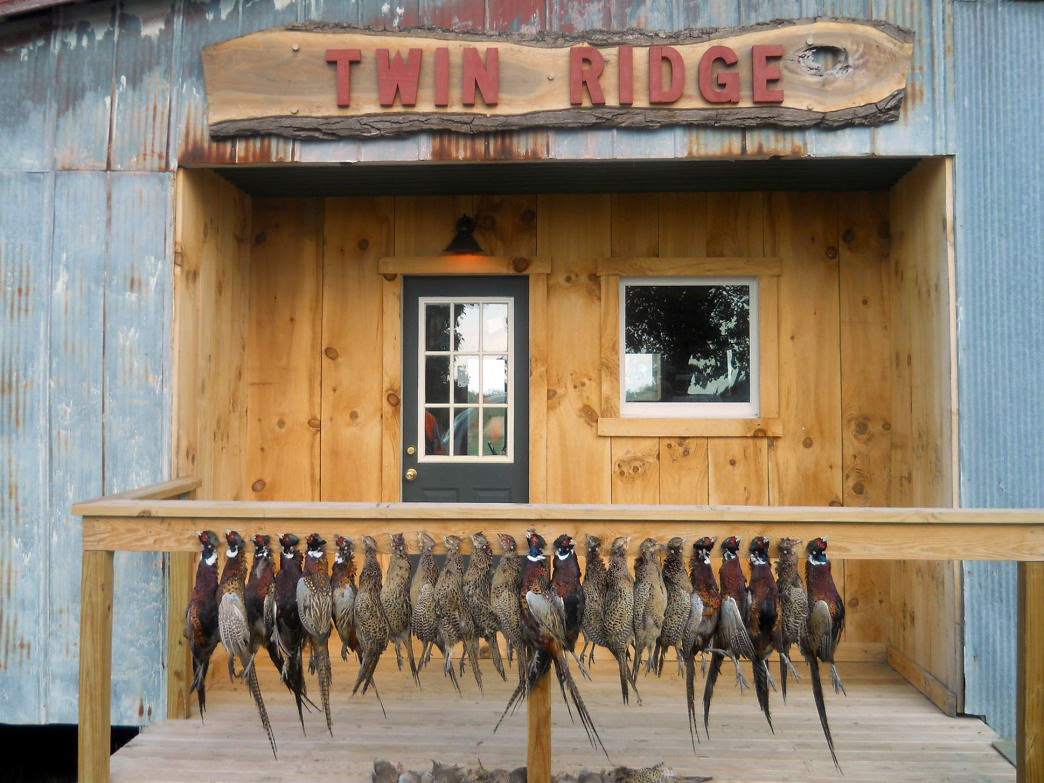 You can hunt quail, pheasant, and chukars at Twin Ridge.     Mark and Brant Minnick